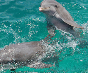 dolphin, animal, and photography image