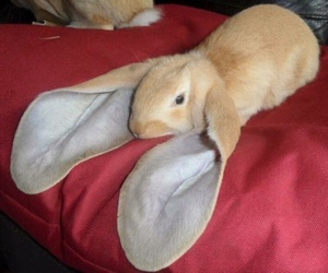 rabbit, animal, and bunny image