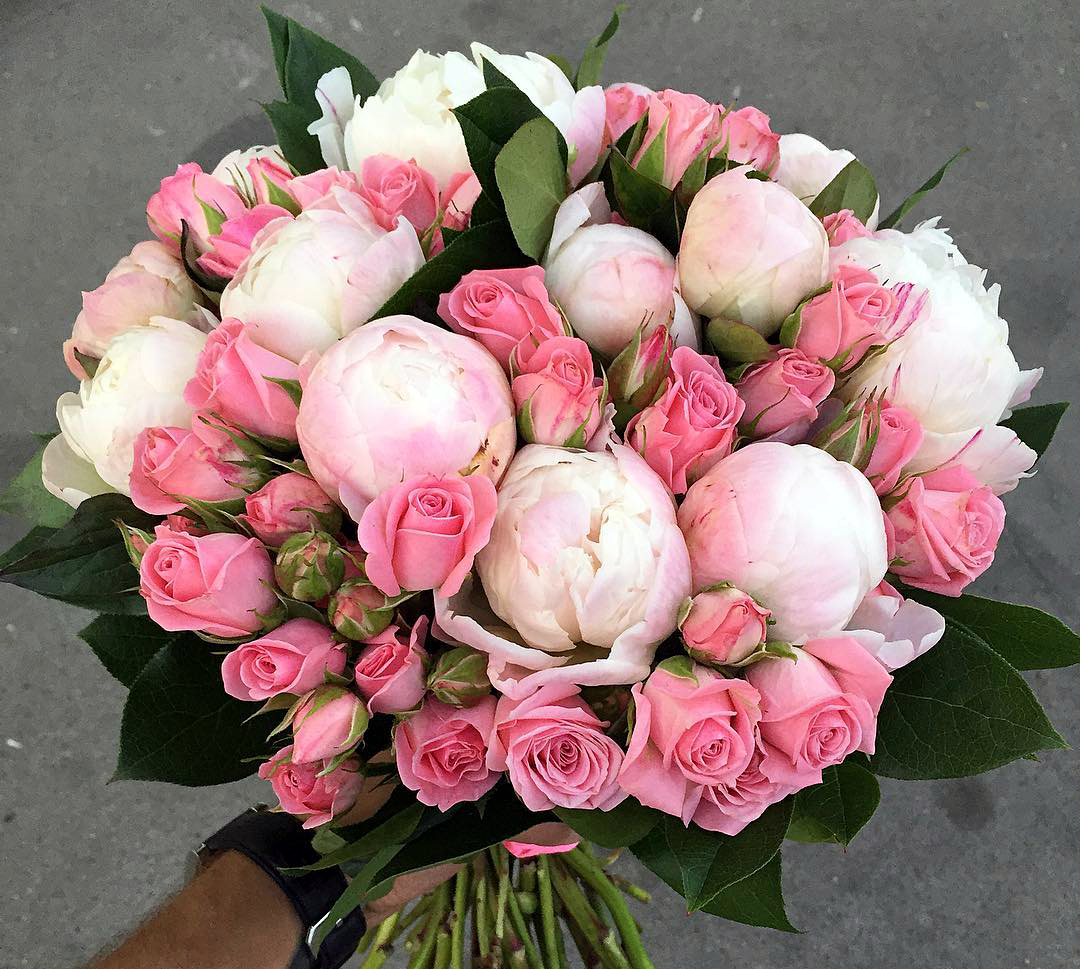 Розы парковые сорта фото и описание регулярно нуждается