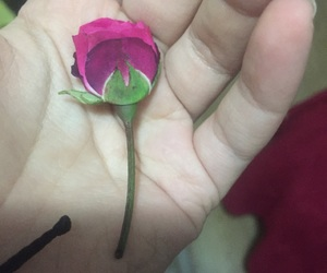 pink, rose, and pureness image