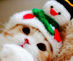 christmas and cat image