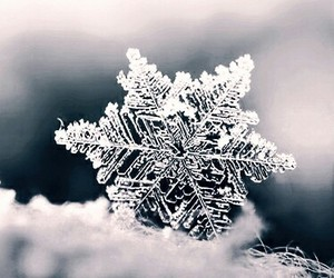 cold, ice, and snowflakes image