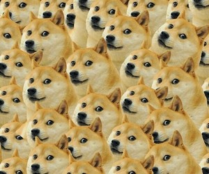 dog, doge, and wallpaper image
