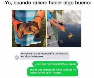 frases, memes, and turtles image