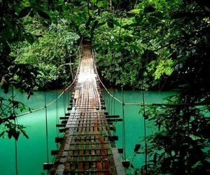 bridge, nature, and tropical image