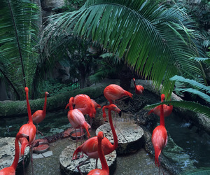 flamingo, animal, and nature image