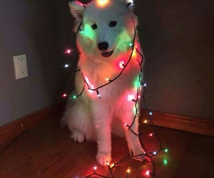 lights, merrychristmas, and dog image