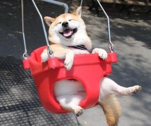 dog, animal, and happy image