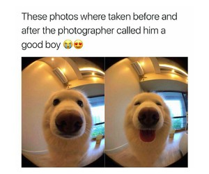 christmas, dog, and funny image