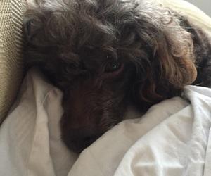 dog, sleep, and cute image