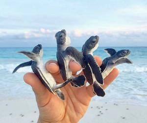 beach, animal, and turtle image