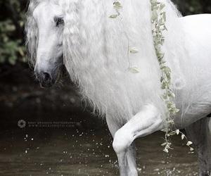amazing and horse image