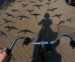bird, bike, and photography image