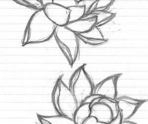 flowers, drawing, and lotus image