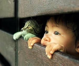 Çocuk, kedi, and merak image