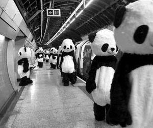 panda, black, and black and white image