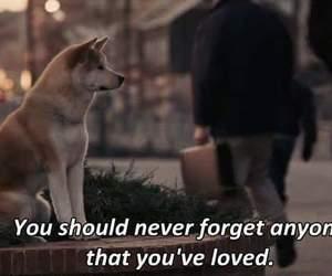 love, dog, and movie image