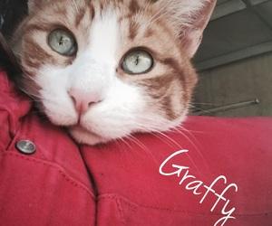 gatti, graffy, and 🐱 image