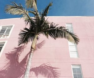 palms, pink, and summer image