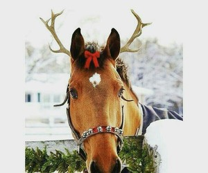 animal, bow, and winter image