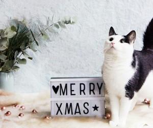 cat, meet, and xmas image