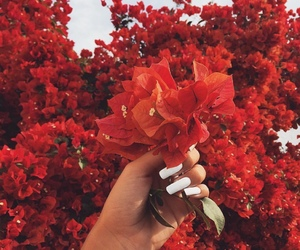 flowers, red, and tattoo image