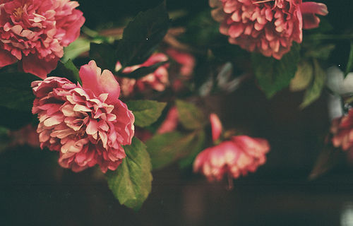 flowers, flower, and summer image