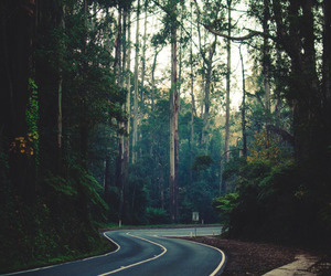 nature, road, and tree image