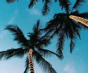 summer, palm trees, and beach image
