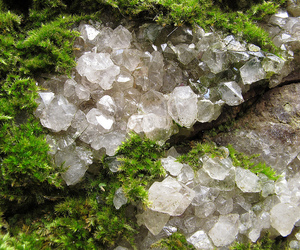 crystals, moss, and canon g12 image