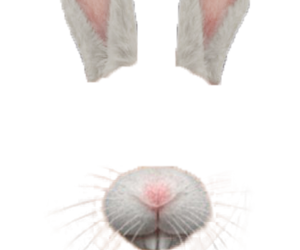 bunny, filter, and png image