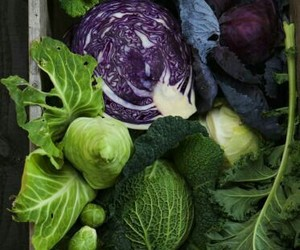 farm, vegetables, and food image