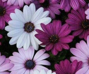 flowers, wallpaper, and white image
