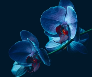 awesome, orchid, and photo image