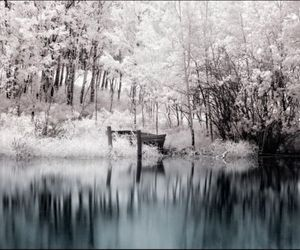 forest, winter, and landscape image