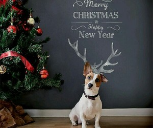 dog and merry christmas image