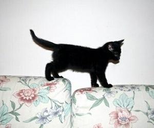 black cat, cute, and kitten image