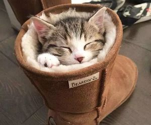 boots, cat, and kitten image