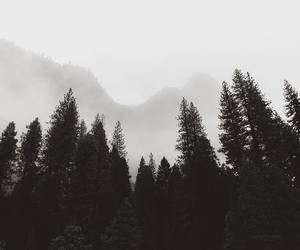 fog, misty, and nature image