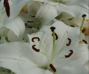 flor, flower, and white image