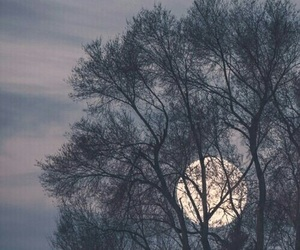 moon, nature, and trees image