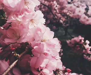 flower, girly, and flowers image