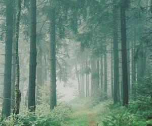 beautiful, naturaleza, and vintage image