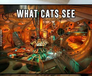 cat, funny, and tardis image