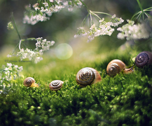 snail, family, and nature image