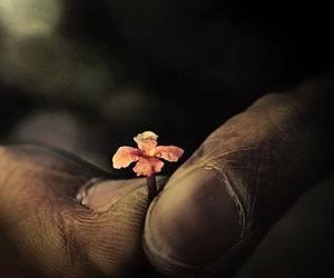 felicidad, flor, and naturaleza image