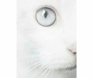 cat, white, and eye image