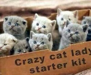 cat, kitten, and crazy image