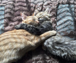cats, lovely, and lovee image
