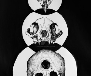 animal, death, and goth image